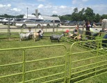 Picnic with farm animals!