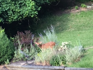Kim Marshall: Lots of yard work and tending to neglected flower beds. Found this little guy in one of them!
