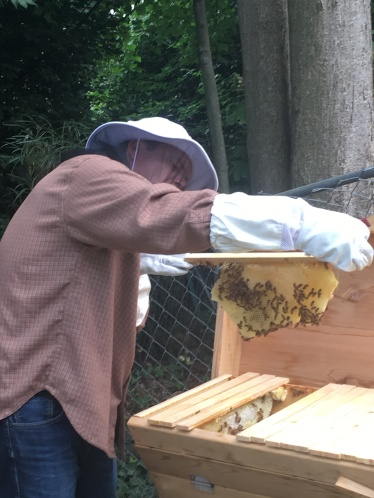 Mike Keifling: Checking in on my backyard bees